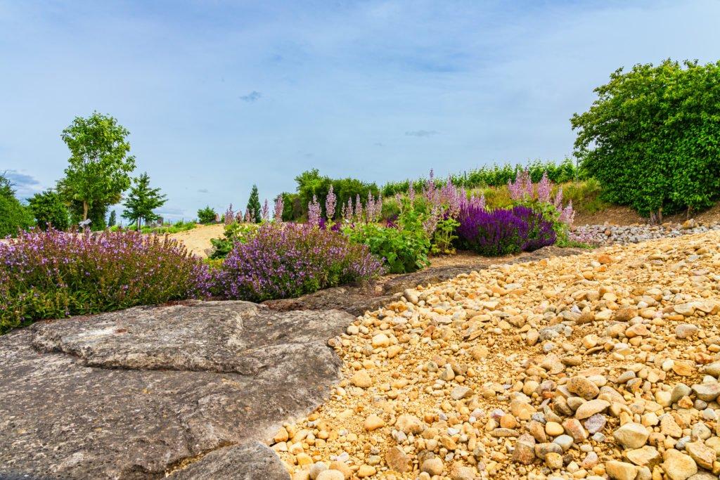 Lavendel auf dem Strandpfad der Sinne