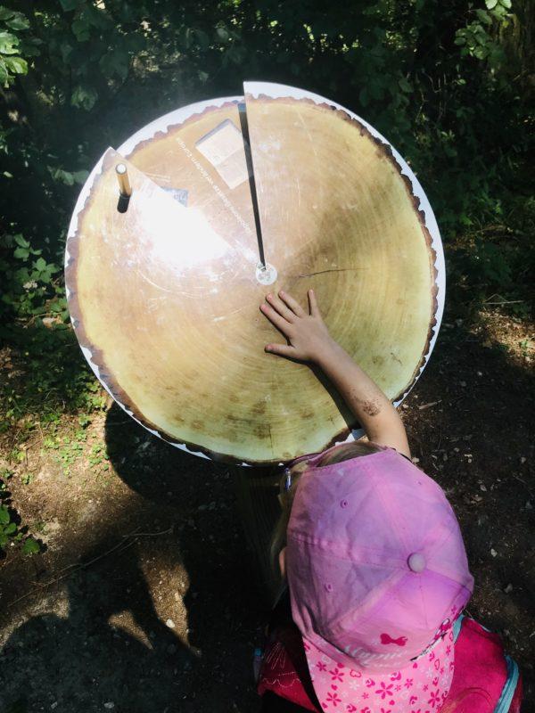 Baumscheiben auf dem Walderlebnispfad Bingen