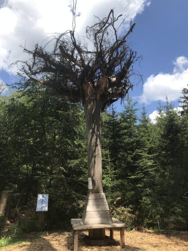 baum auf dem walderlebnispfad binger wald