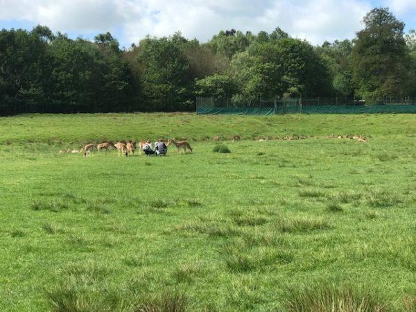 Tiere füttern im Hochwildschutzpark Hunsrück in Rheinböllen