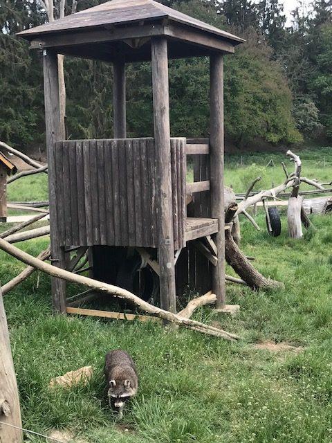 Tiere im Hochwildschutzpark Hunsrück in Rheinböllen