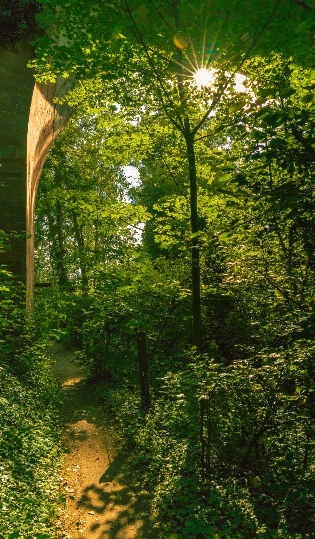 eisenbahnviadukt-vogellehrpfad-monsheim