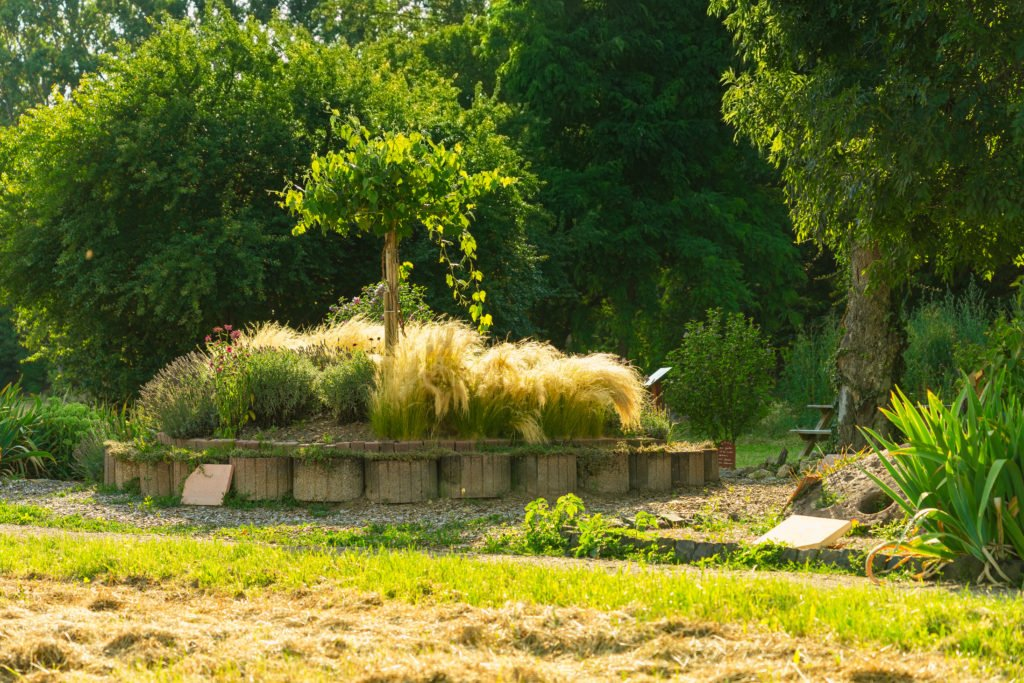 pflanzen-pfrimmgarten-monsheim