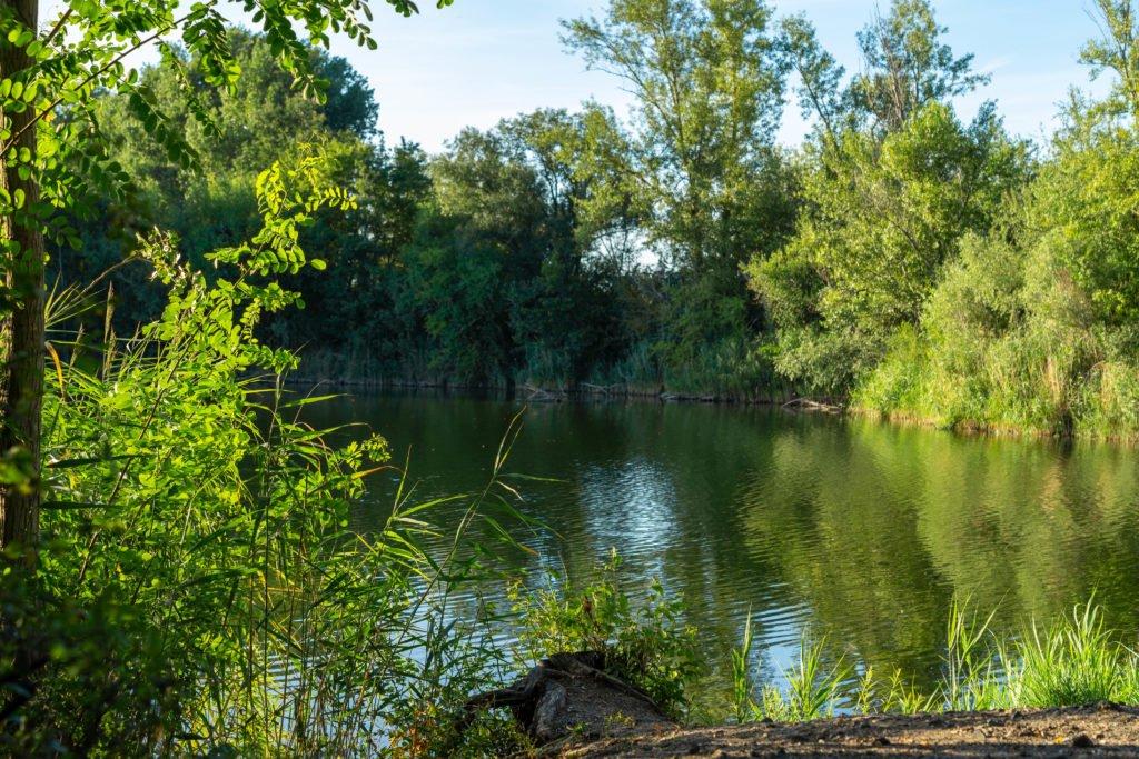 kräppelweiher-sommer