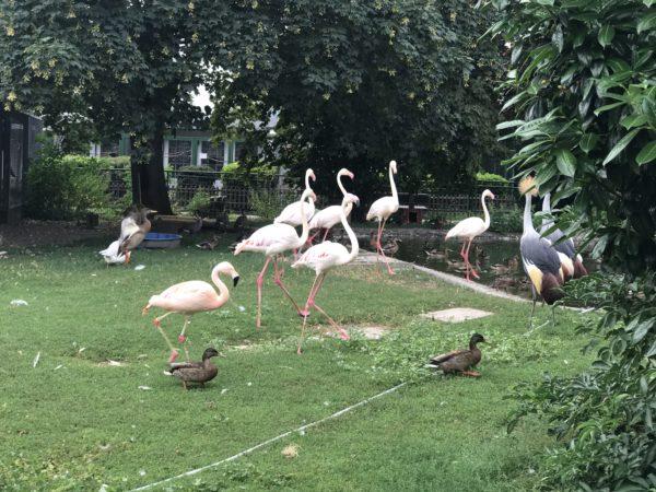flamingos im vogelpark bobenheim-roxheim