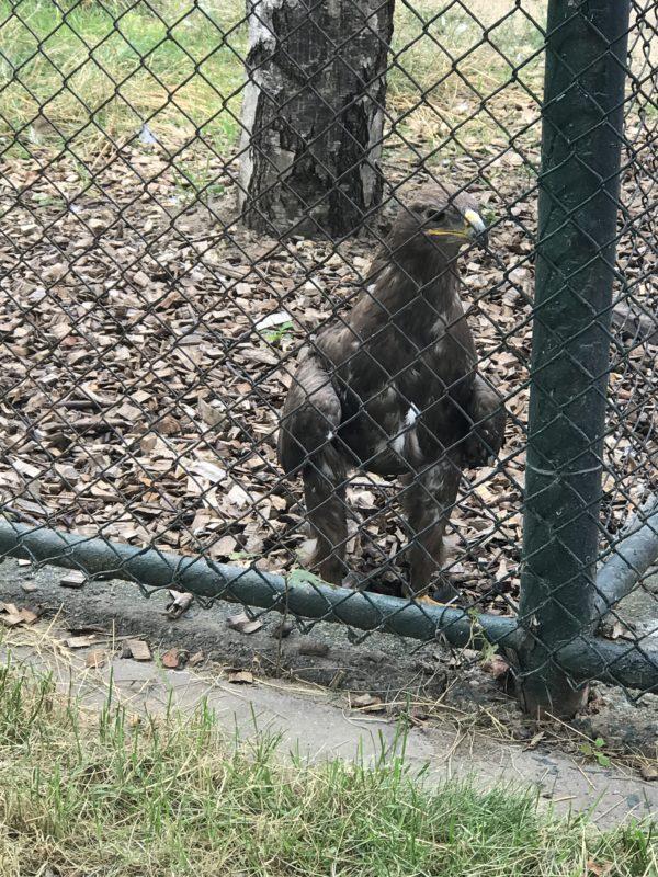 savannenadler-im-vogelpark-bobenheim-roxheim