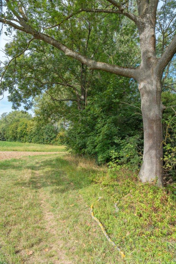 wanderweg im zellertal entlang der pfrimm