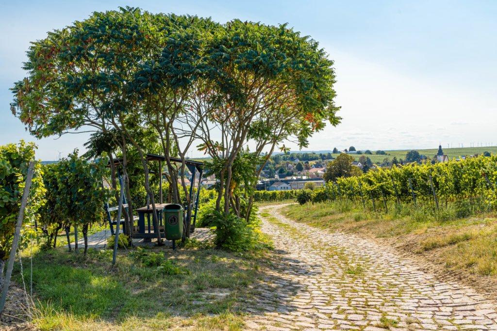 pikcnickplatz-bechtheim-weinpfad