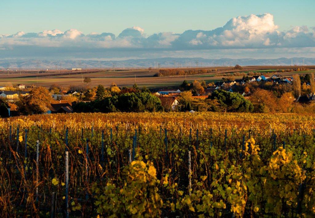 Herbst im Wonnegau Westhofen
