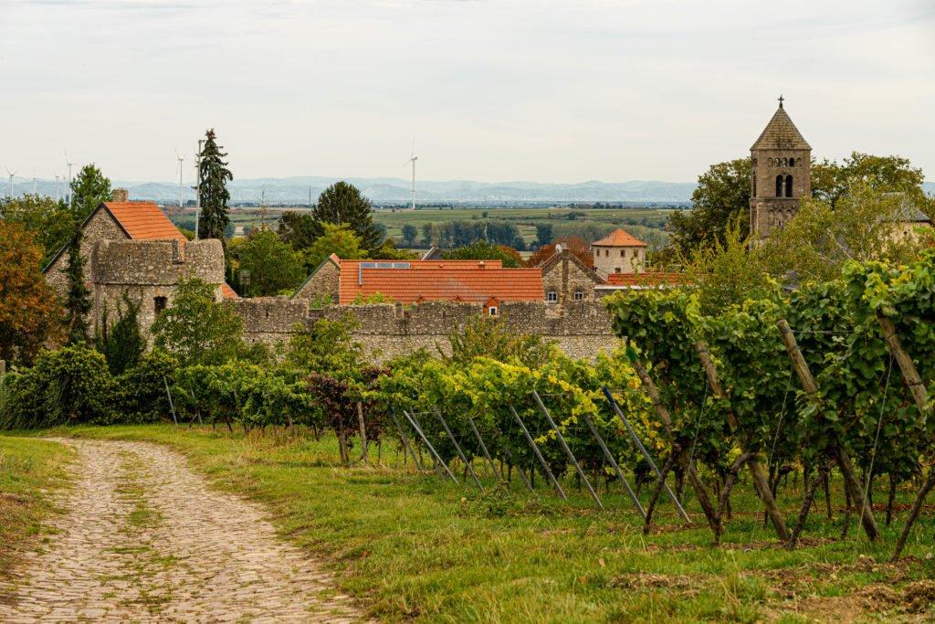Fleckenmauer Dalsheim