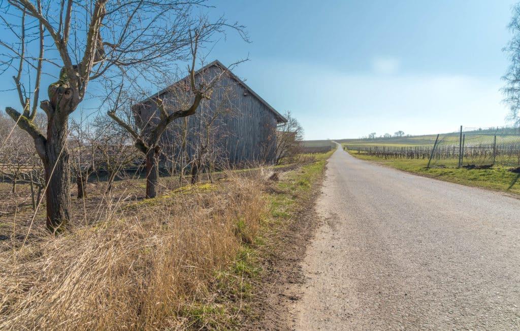 wind-rebenweg-wachenheim-zellertal