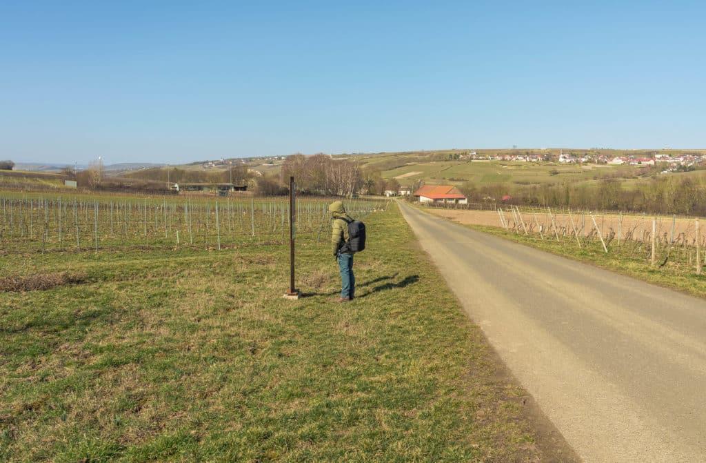 wanderer-infotafel-wein-rebenweg-wachenheim