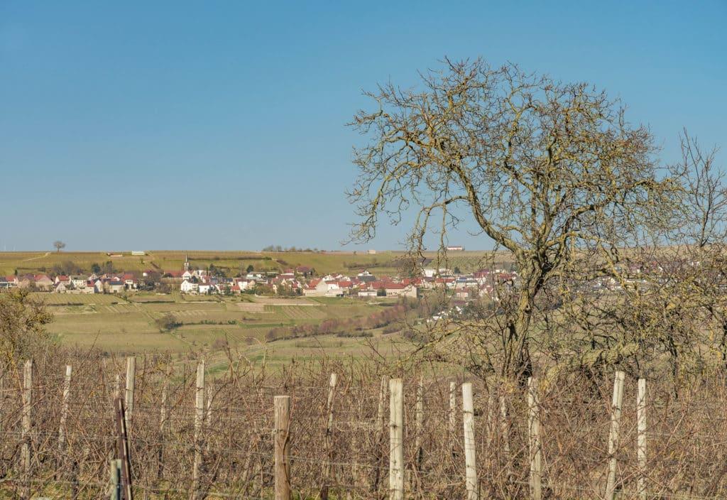 erlebnisse-wind-rebenweg-wachenheim