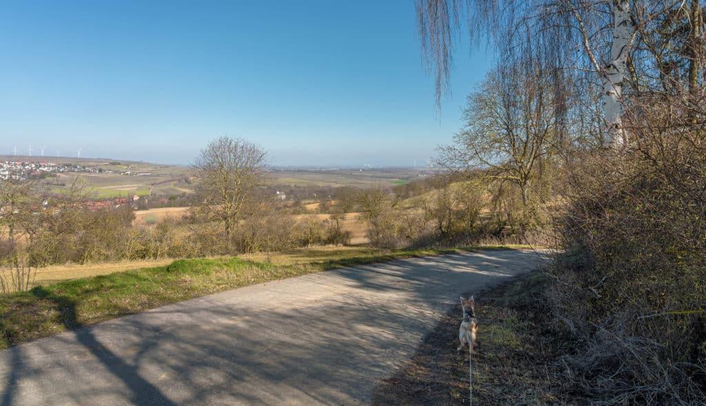 panorama-wind-rebenweg-zellertal