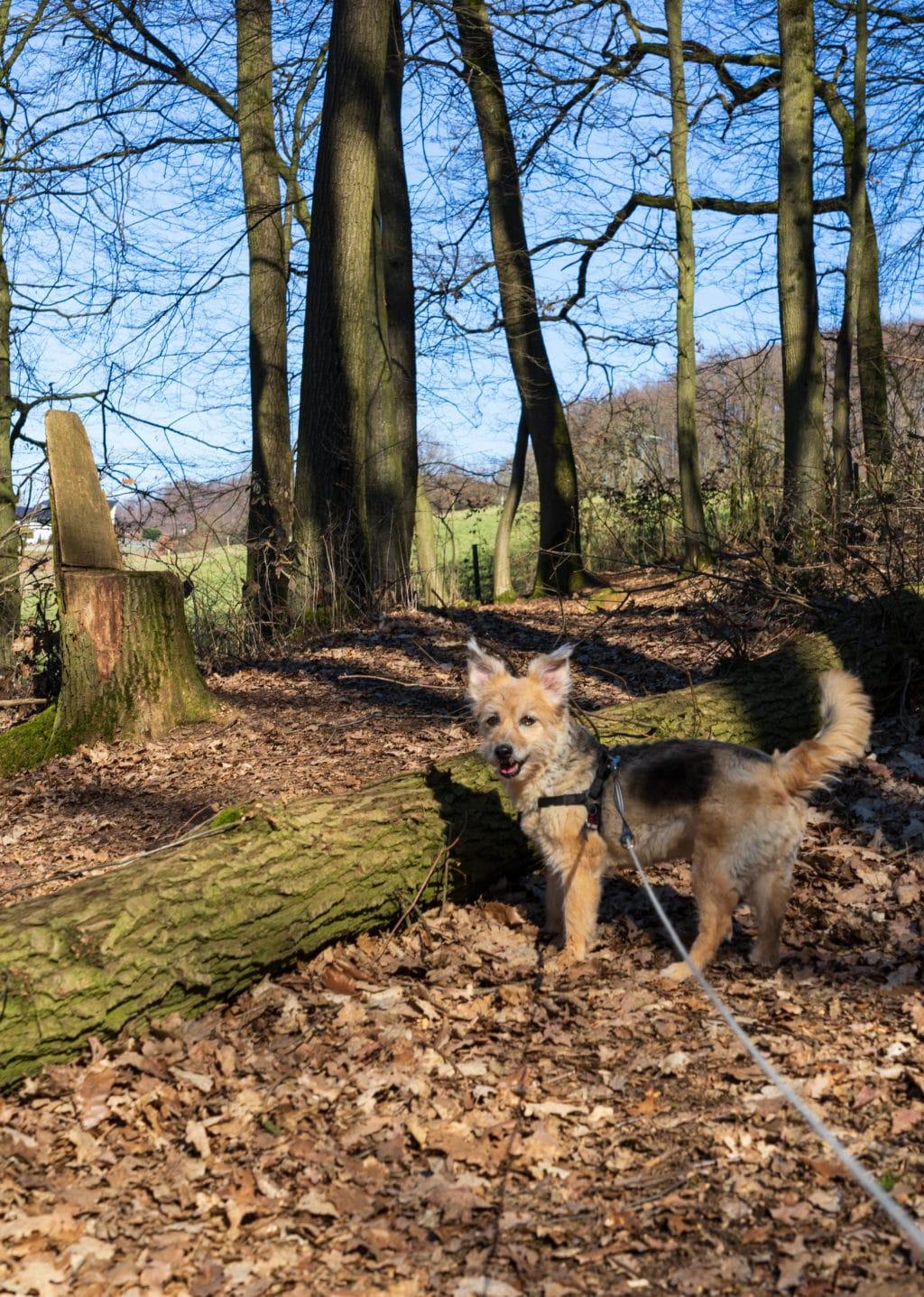 hund-wandern