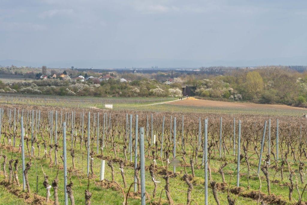 wanderweg-monsheim-fruehling