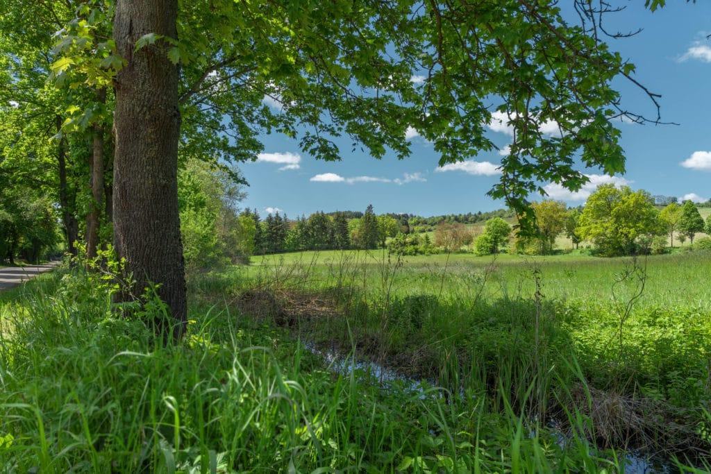 landschaft-nieder-wiesen