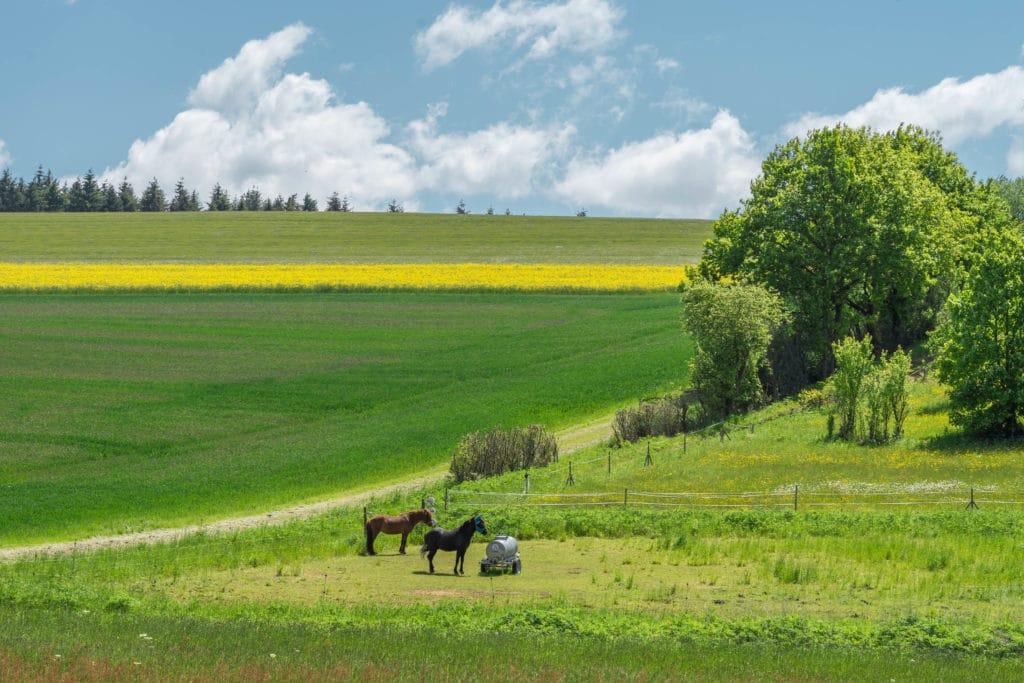 pferde-nieder-wiesen